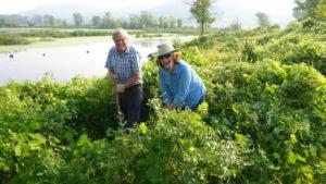 friends-of-the-la-crosse-river-marsh-credit-john-sullivan