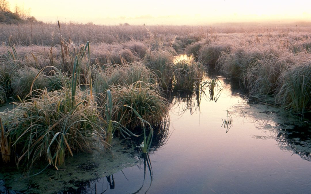 Wetlands and groundwater: It's all connected