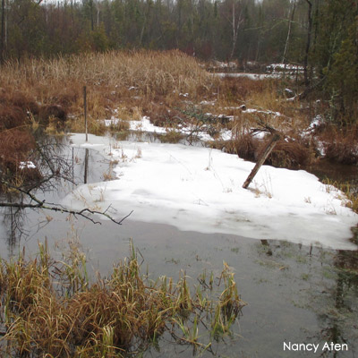 Wetland in winter with snow and water