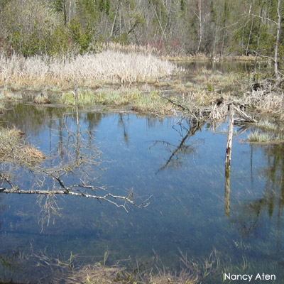 Wetland in spring with high water