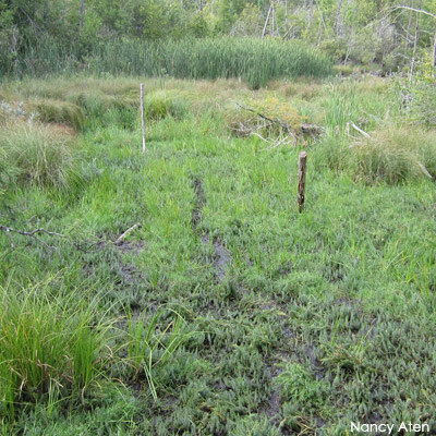 Wetland in summer with no standing water