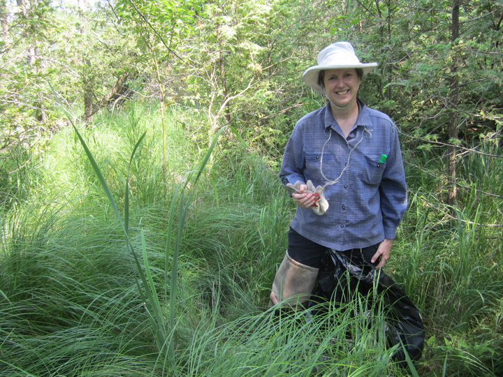 Caring for wetlands by mapping invasive plants