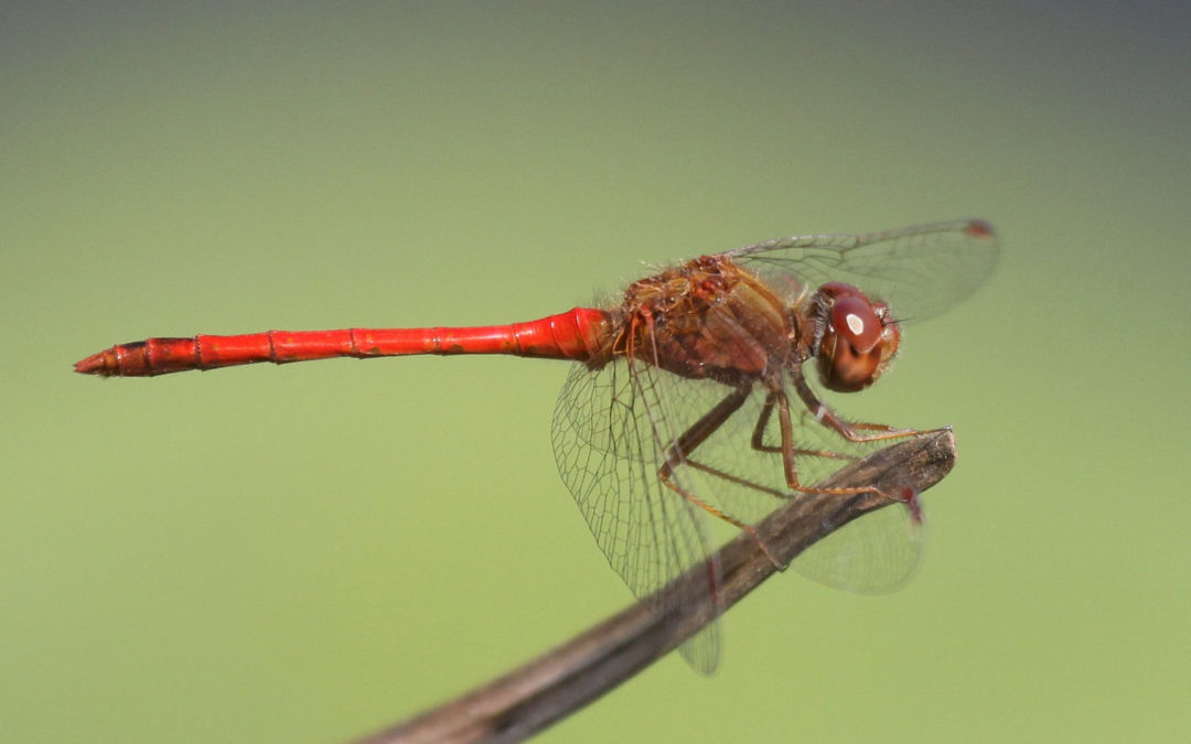 Tips for dragonfly spotting
