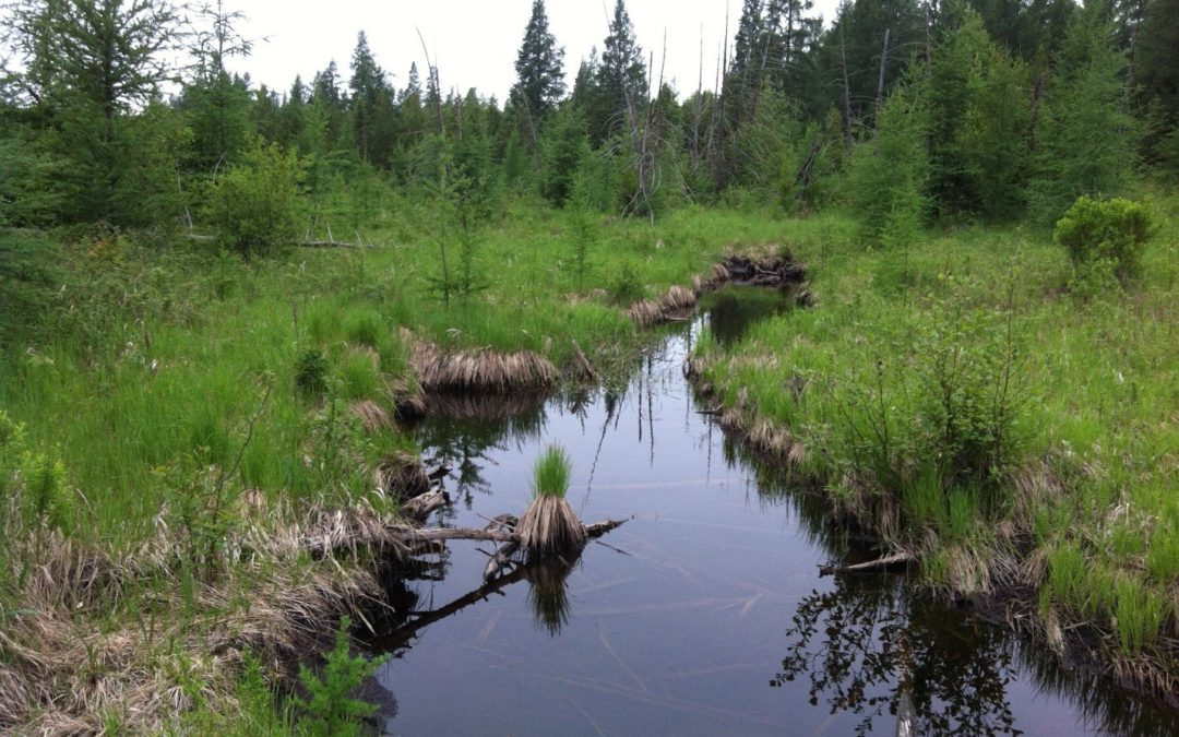 How wetlands protect communities during floods