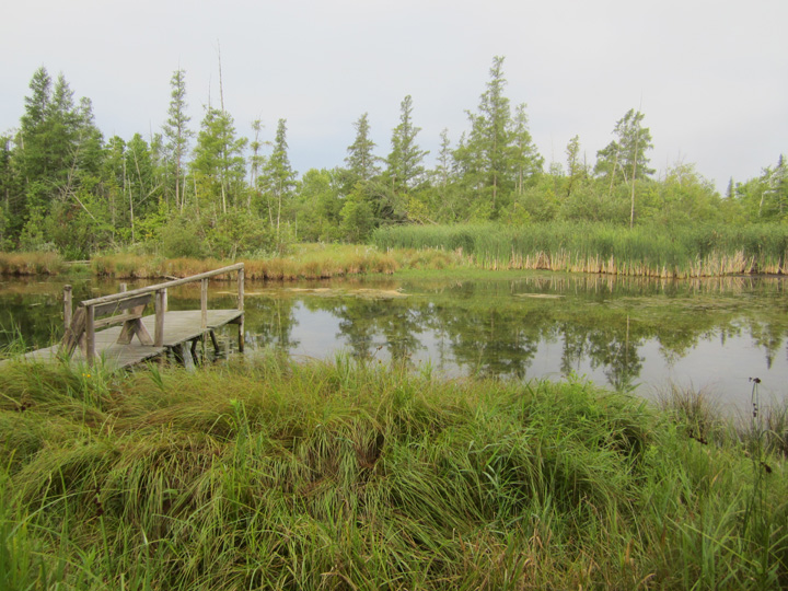 Wetland with pier
