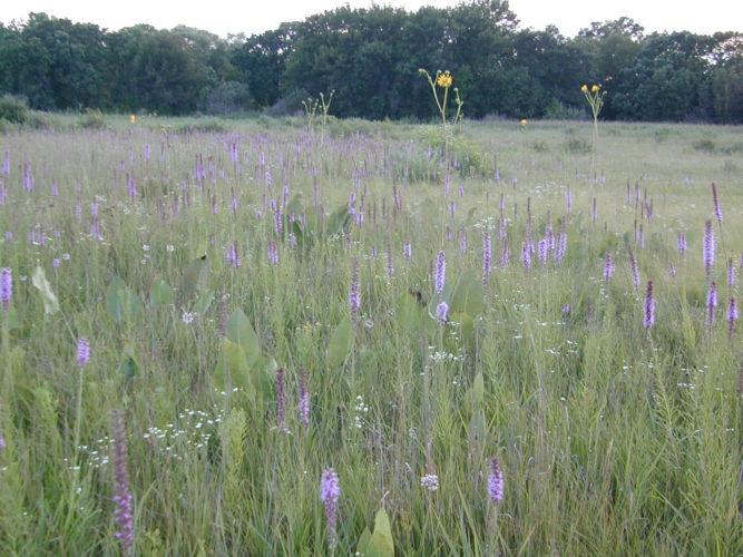 Wisconsin Wetlands Association's Statement on the Foxconn Bill