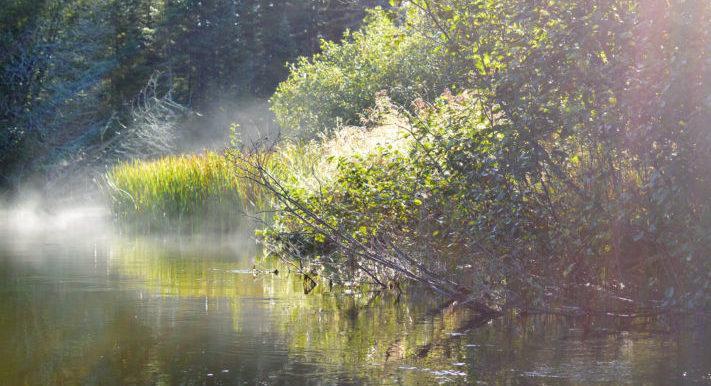 Let's put wetlands to work