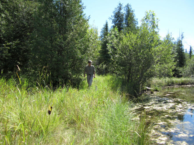 Prioritizing Invasive Plant Control, Part III