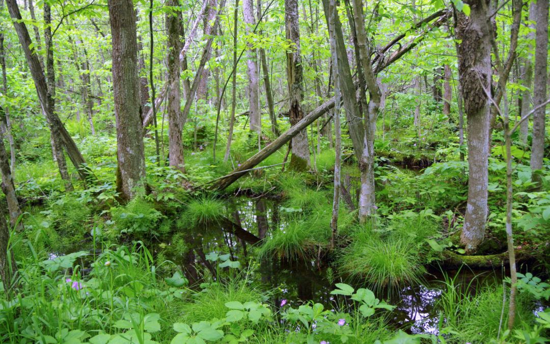 Small wetlands make big impact