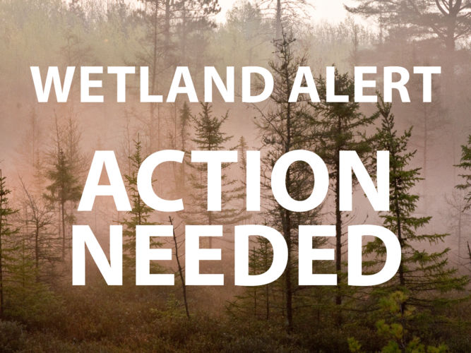 Protect Non-Federal Wetlands!