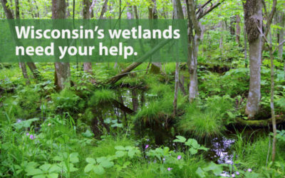 Stand up for wetlands: Hearing Dec. 21st