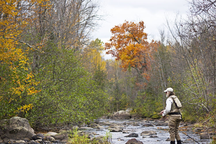 Healthy trout streams need healthy wetlands