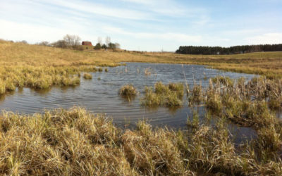 """Isolated"" wetlands protections hanging by a thread"