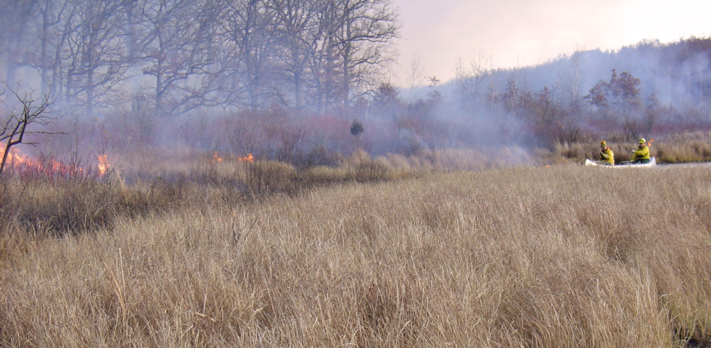 Can I use prescribed fire as a management tool in my wetland?