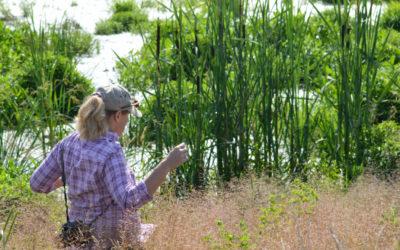 Wetlands working for clean water