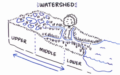 How Wetlands Manage Water