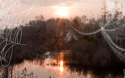 Hallowed shallows: Moving beyond the haunted history of wetlands