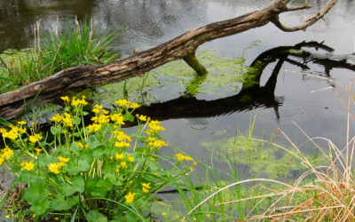 Finding hope and connection in wetlands