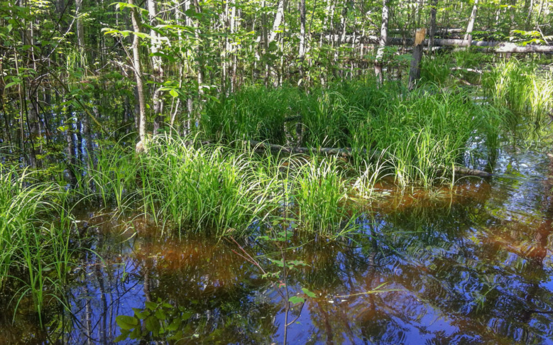 WWA opposes Clean Water Act rollbacks