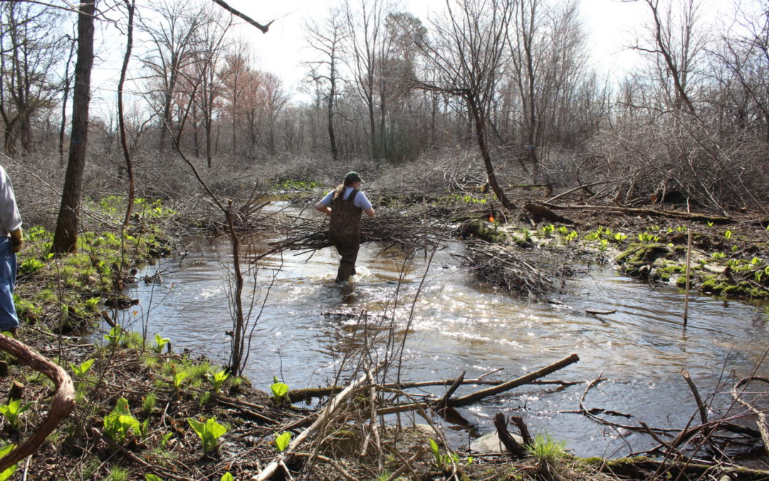What is the Little Plover River Watershed Enhancement Project?