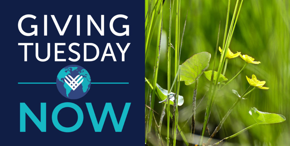 How you can support wetlands for Giving Tuesday Now
